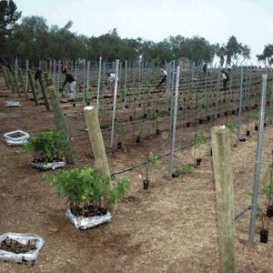 babyvines_planting_square