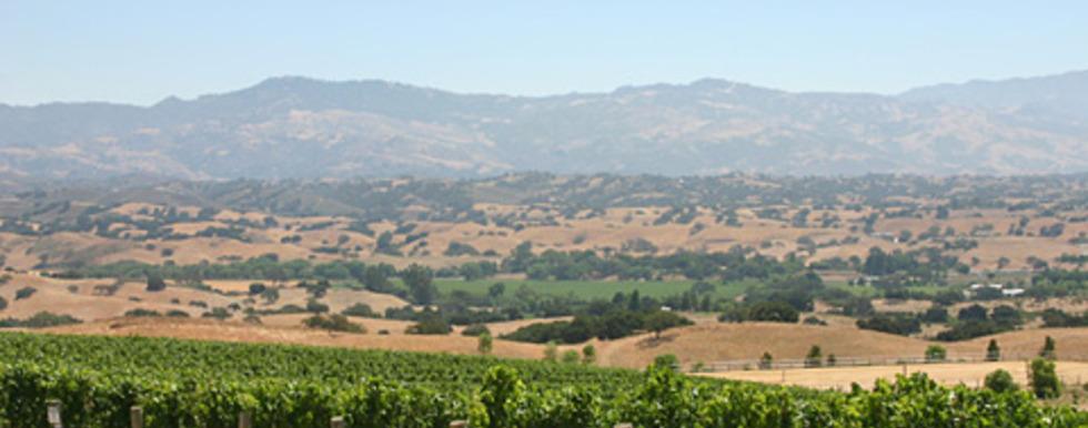 Tierra Alta Vineyard