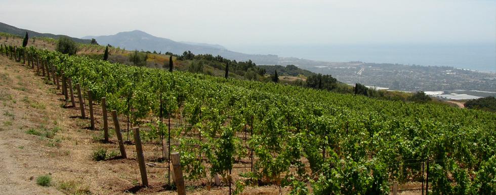 Paredon Vineyard