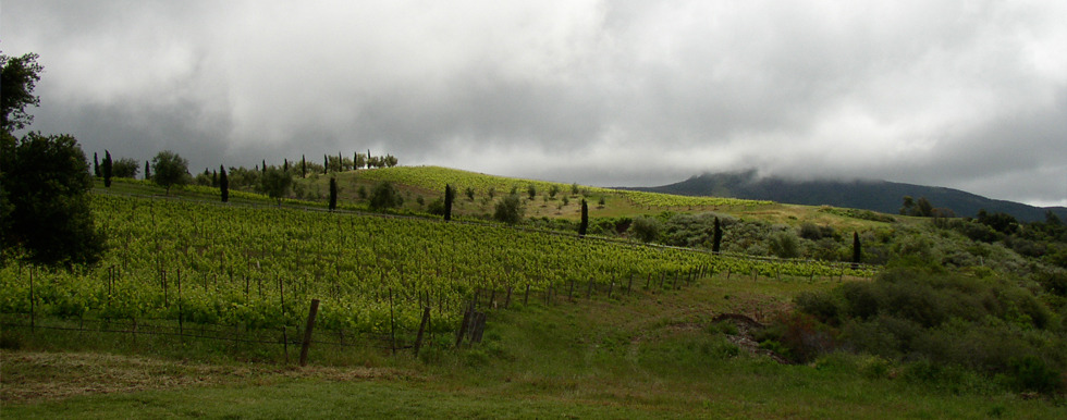 Paredon Vineyard