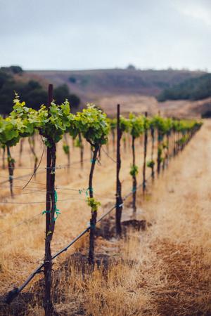The Yard Vineyard