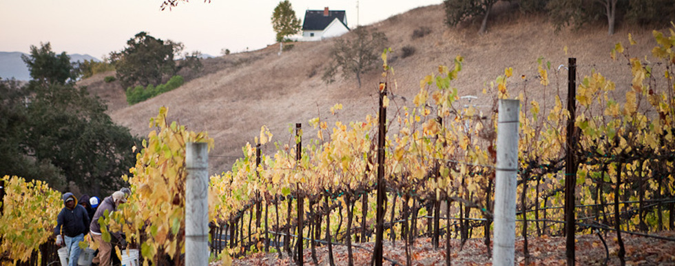 Woodstock Vineyard