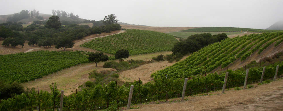 Turner Vineyard