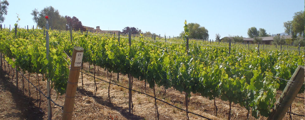 Rossi Vineyard