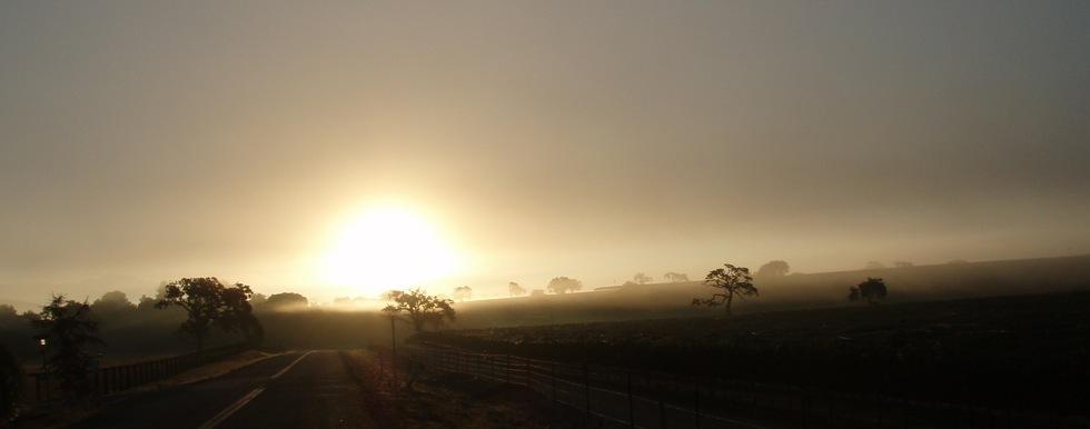 Vineyard at Dawn