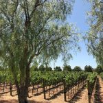 Lyons Vineyard Makes Its Debut